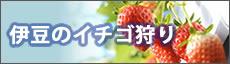 伊豆のイチゴ狩り