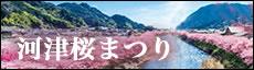 河津桜祭り
